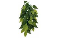 Растение для террариума TRIXIE - Ficus, D- 20 x 30 см