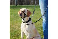 Учебная петля для собак TRIXIE, 22см , шейный ремень 35-42см