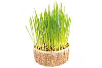 Трава для кошек микс